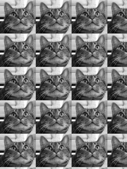Nested for loops used with paste() to duplicate the cat's face (a duplicat, if you will).